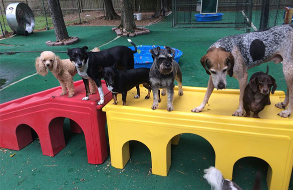 Dog Daycare At Home
